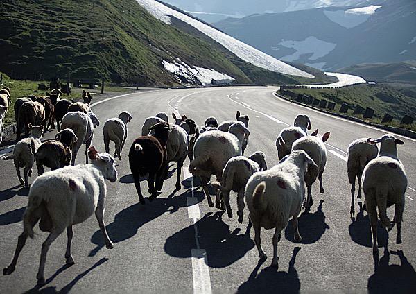 SchafeStrasse